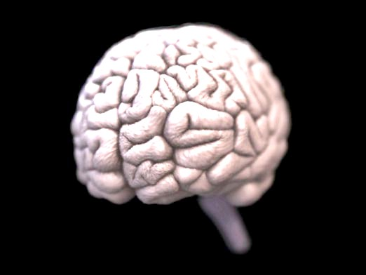 Фото - За що відповідають півкулі мозку?