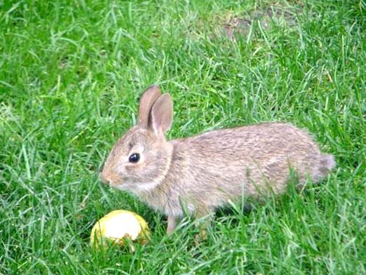 Фото - Чим годувати кроликів?