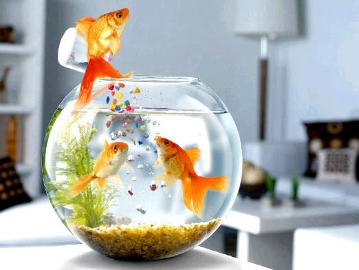 Фото - Чим годувати рибок?