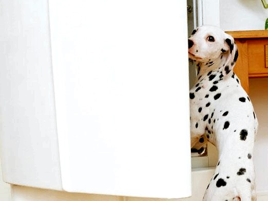 Фото - Чим годувати собаку?