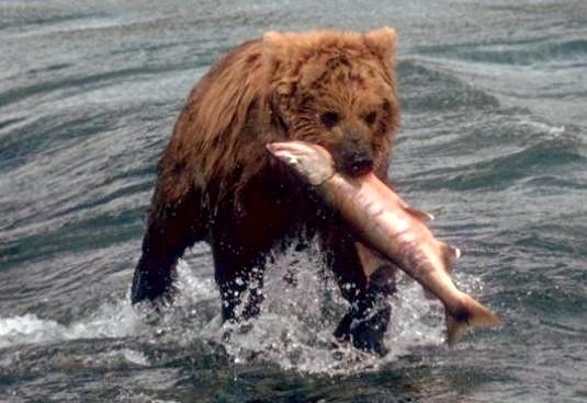Фото - Чим харчується ведмідь?