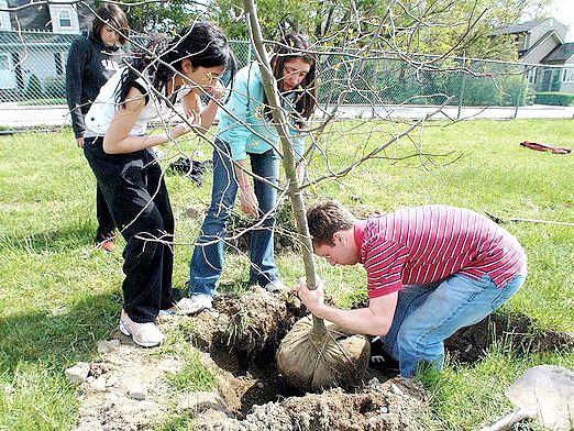 Фото - Коли садити дерева?