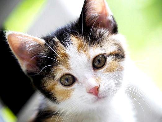 Фото - Чим хороші кішки?