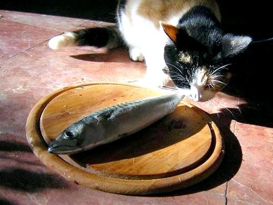 Фото - Чим харчуються кішки?