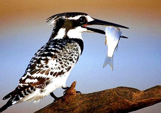 Фото - Чим харчуються птахи?