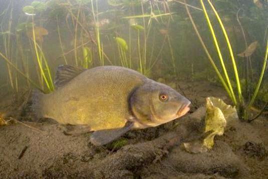 Фото - Чим харчуються риби?