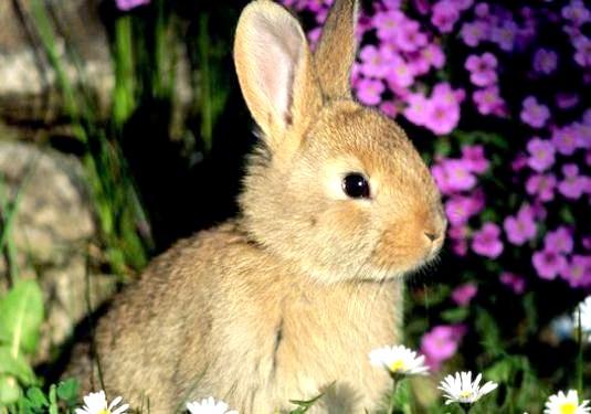 Фото - Чим харчуються зайці?