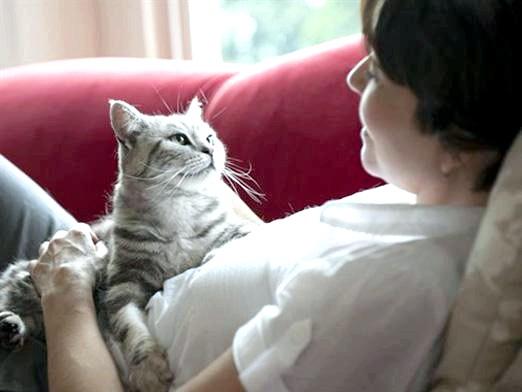 Фото - Чим корисні кішки?