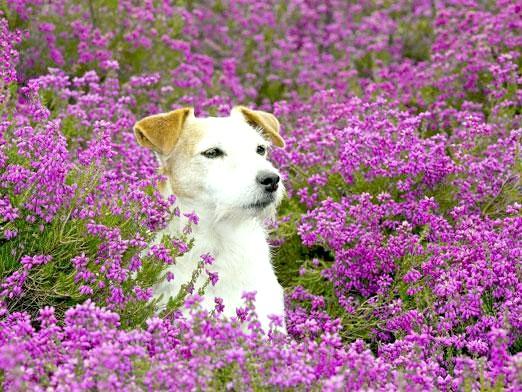 Фото - Чим рослини відрізняються від тварин?
