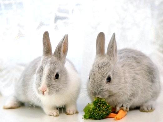 Фото - Що їдять кролики?