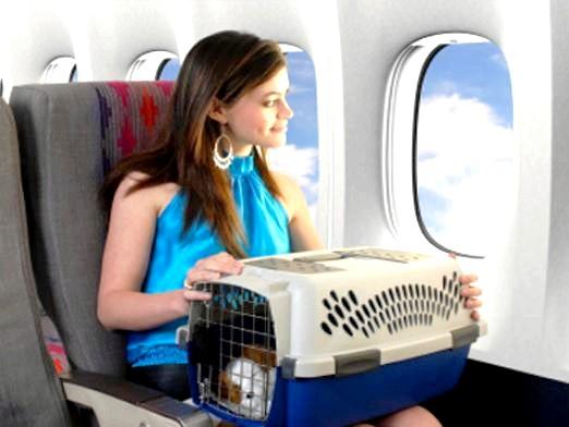Фото - Що не можна брати в літак?