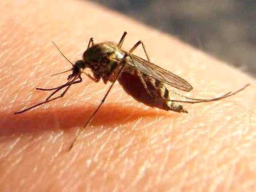 Фото - Чому комарі не кусають?