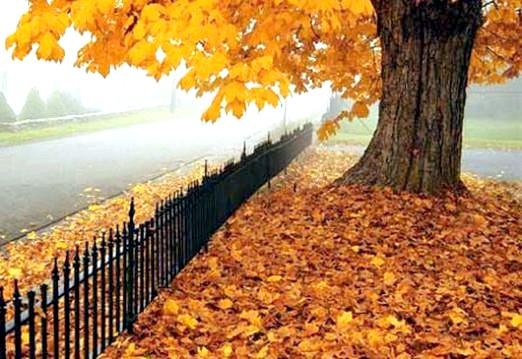 Фото - Чому листя жовтіє і опадає?