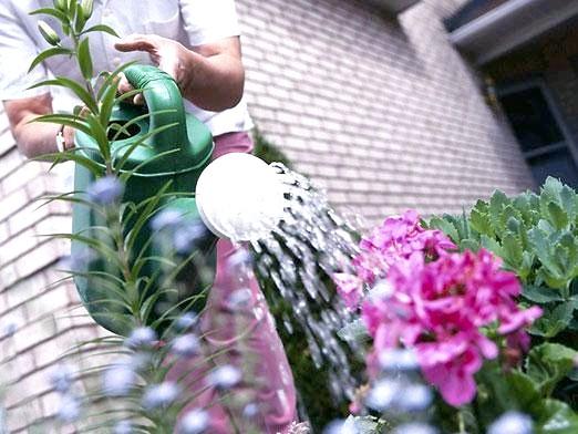 Фото - Чим підгодовувати квіти?