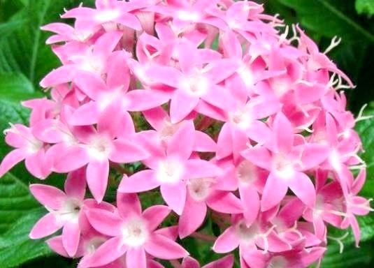 Фото - Чим корисні квіти?