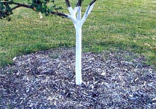 Фото - Чим удобрювати дерева?