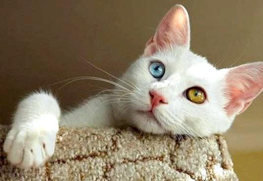 Фото - Чим вивести котячий запах?