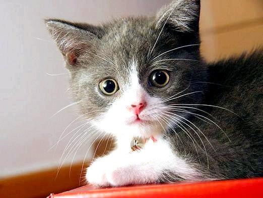 Фото - Що відчувають кішки?