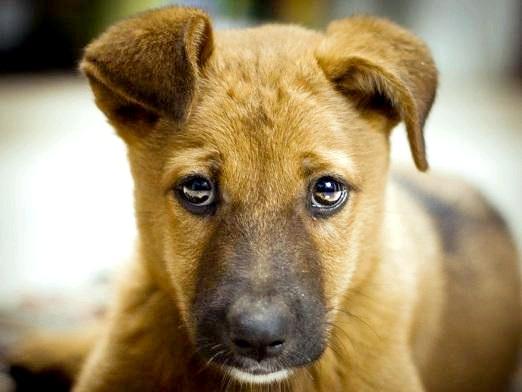 Фото - Що відчувають собаки?