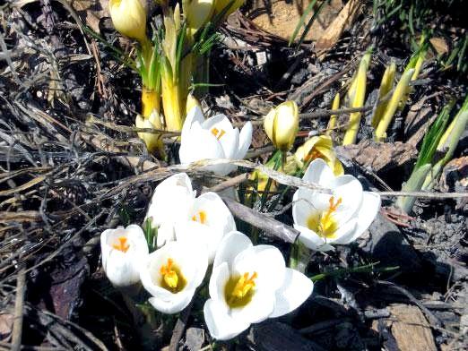 Фото - Що цвіте у березні?