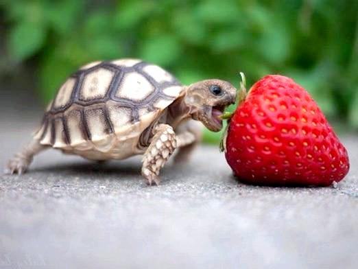 Фото - Що їдять черепахи?