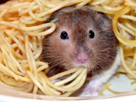Фото - Що їдять хом'яки?