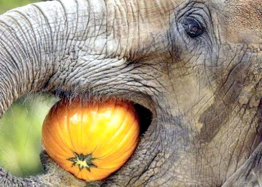 Фото - Що їдять слони?