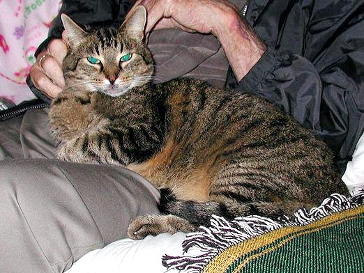 Фото - Що лікують кішки?