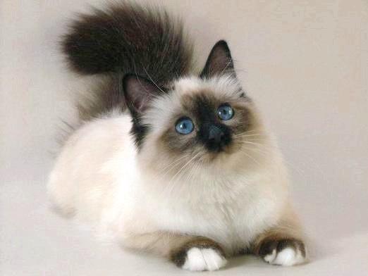 Фото - Що люблять кішки?