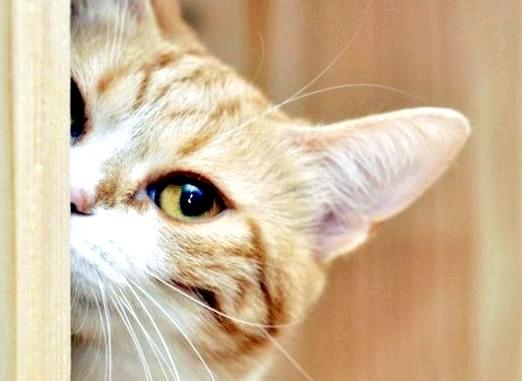 Фото - Що люблять коти?