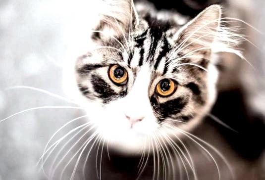 Фото - Що можуть кішки?