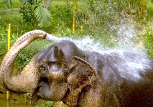 Фото - Що може слон?