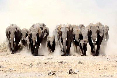 Фото - Слон