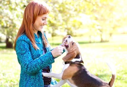 Фото - Що подобається собакам?