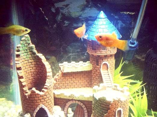 Фото - Що потрібно для акваріума?