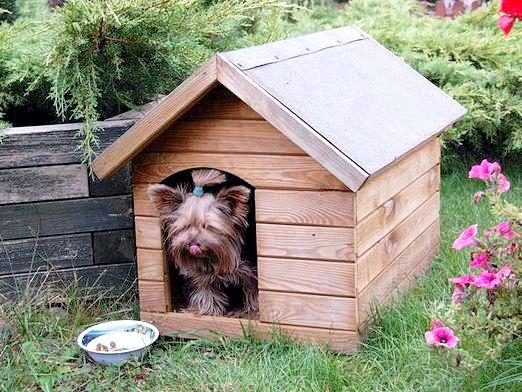 Фото - Що потрібно для собаки?