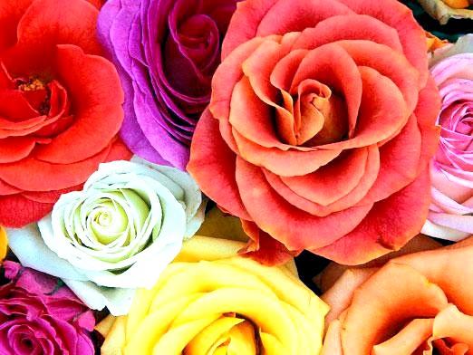 Фото - Що означає колір квітів?
