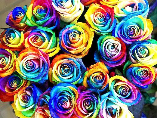 Фото - Що означає колір троянд?