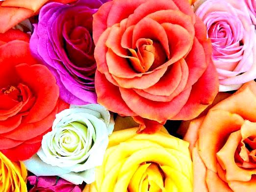 Фото - Що означає квітка?