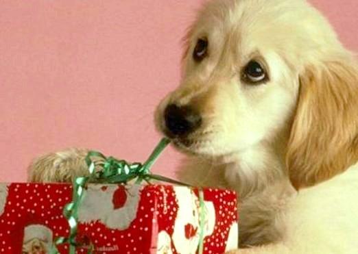 Фото - Що подарувати собаці?