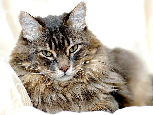 Фото - Що розуміють кішки?