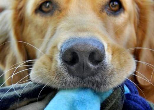 Фото - Що розуміють собаки?