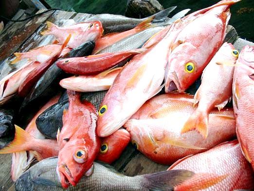 Фото - Що приготувати з риби?