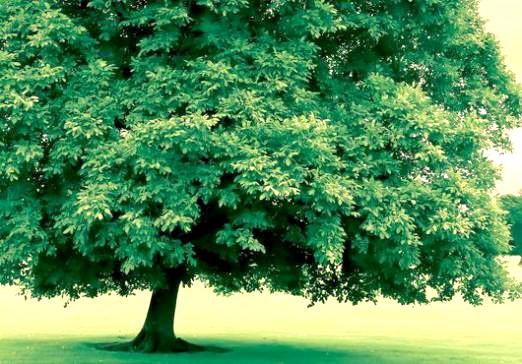 Фото - Що таке дерево?