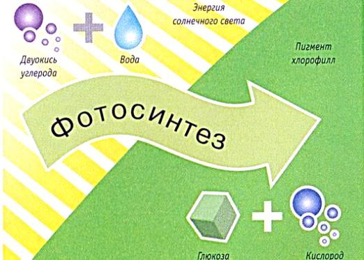Фото - Що таке фотосинтез?