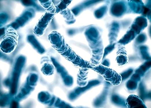 Фото - Що таке хромосоми?