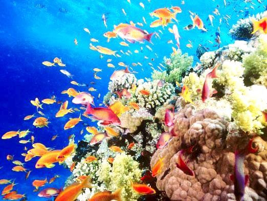 Фото - Що таке екосистема?