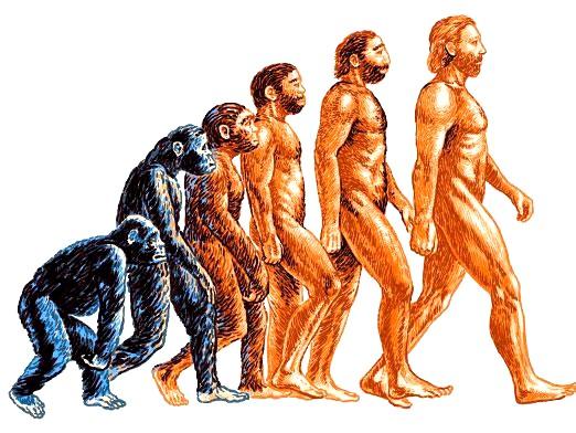 Фото - Що таке еволюція?