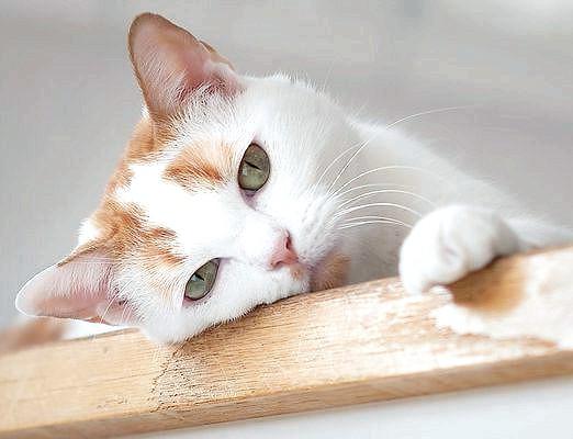 Фото - Що таке кішка?