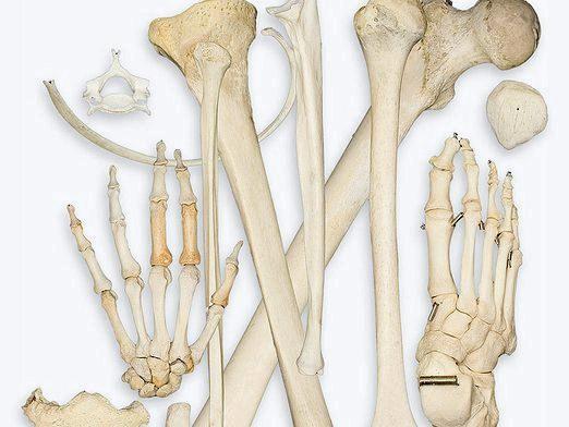 Фото - Що таке кістка?